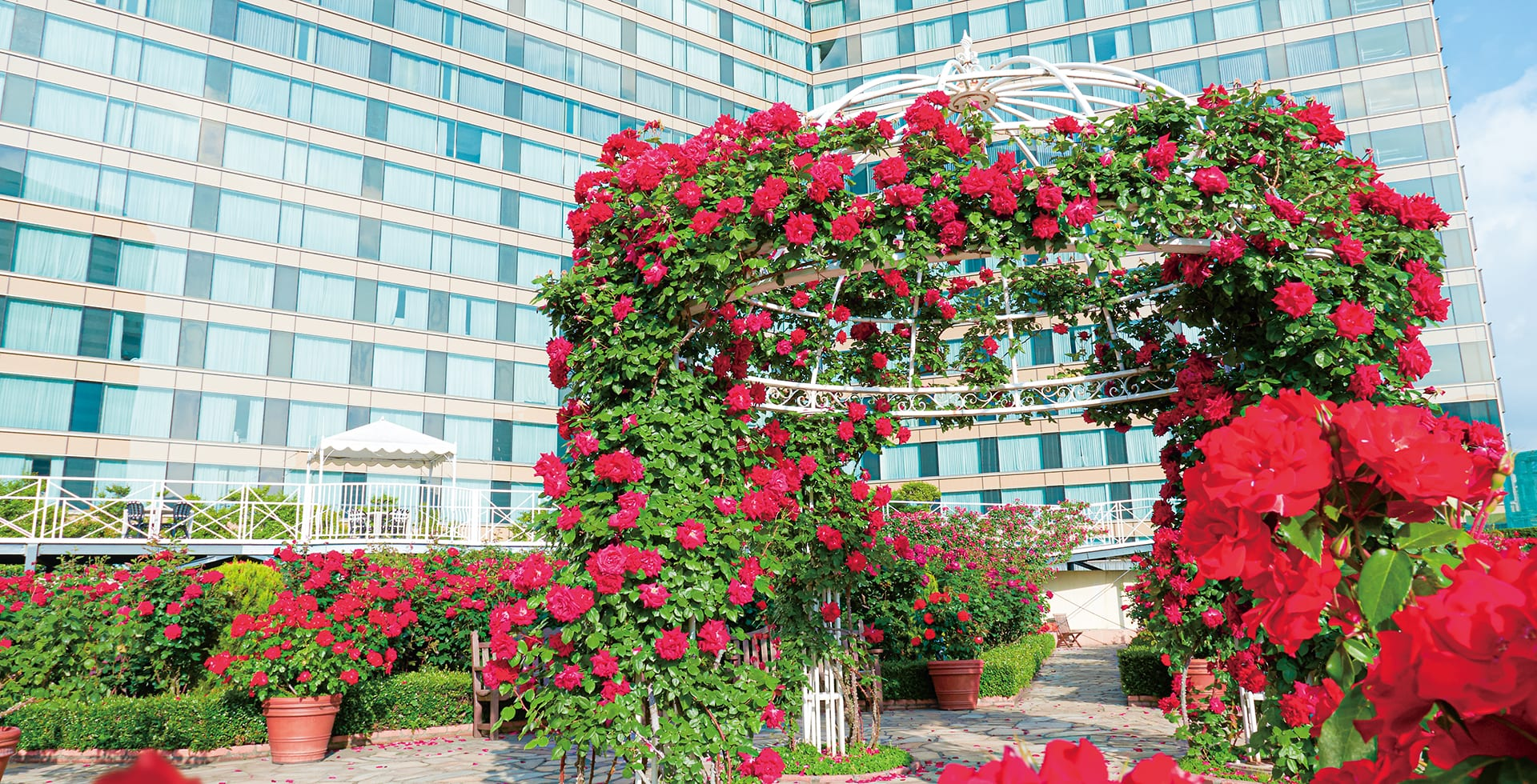 Red Rose Garden Special Month